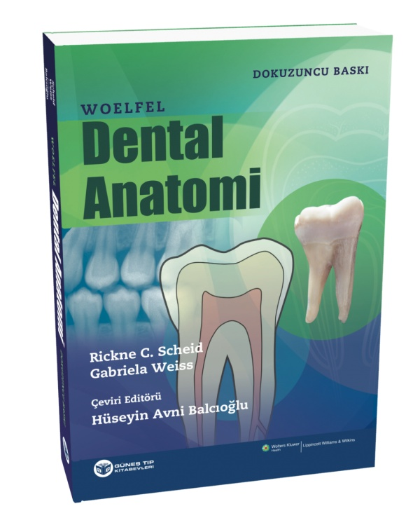 -Woelfel-Dental-Anatomi
